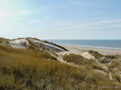 Dunes (Nelleke C) Tags: 2017 noordhollandsduinreservaat duinen dunes landscape landschap nederland netherlands noordholland