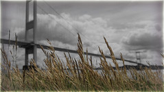 Throught The Grasses (mik-shep) Tags: 365the2017edition day154365 day154 2017onephotoeachday 3652017 3jun17 grasses bokeh severn bridge river