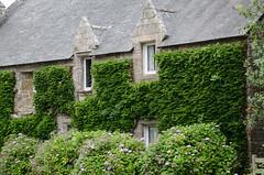 Maison bretonne (bpmm) Tags: bretagne finistère mousterlin ardoise fenêtre hortensia maison toit