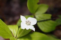Tobermory (Kyra McKenzie) Tags: tobermory bruce peninsula ontario park nature wildlife