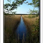Andreas Kalbow Landschaft 2017.05.21 Fischland Darß (17) thumbnail