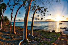 Arbres fisheye version HDR (Pop626262 (Fort occupé)) Tags: freedom mer martinique madinina antilles ciel soleil coucher vacances arbre nature nikon hdr