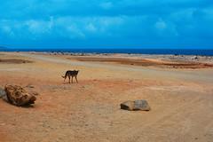 Alone. (ost_jean) Tags: dog animal sea ostjean blue nature nikon d5200 afs dx nikkor 35mm f18g