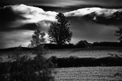 Moody Tree (Jonathan Goddard1) Tags: pentax k1 sigma170500mm tree fields countryside rural pastoral farm sky clouds dark hedges hedgerow contrast monochrome landscape