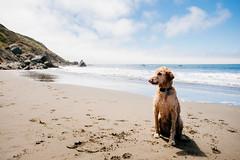 Kiss (DEARTH !) Tags: california beach ocean bayarea chase wetdog dog marincounty dearth northerncalifornia muirbeach pacific roadtrip