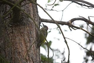 Wet woodpecker