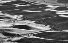 light on the land (Dean Forbes) Tags: palouse bw sunsetlight steptoebutte wheatfields washington