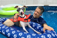 Summer is Here (DiamondBonz) Tags: spanky whippet doggles goggles life jacket swim swimming handsome dog hound