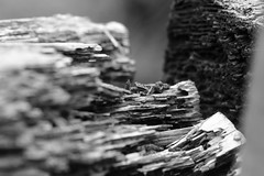 MM: broken (AngharadW) Tags: grain dof sleeper wood mono angharadw broken macro macromonday