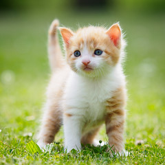 Happy Caturday! (Karsten Gieselmann) Tags: 40150mmf28 braun dof em5markii grün katzen mzuiko microfourthirds olympus schärfentiefe weis brown green kgiesel m43 mft white