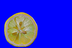 Lemon Slice on Blue (KellarW) Tags: blankspace citrus negativespace memable refreshing yellow lemon blue colorful brightcolors blank bright onblue memeable macro openspace brightcolor meme fruit kitchenart kitchen