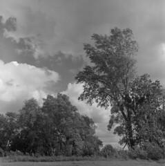Big cloud day (Other dreams) Tags: grudziądz dragacz michale pomerania pomorze vistulalandscapepark npk big clouds spring trees wind landscape poland polska fp4 paranols negative bw film nature analog rolleiflex35f