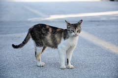 Street cat (elka.) Tags: cats chat cat neko katze kot gata gatta nikon nature animal katte katt kotka outside gatto greece γάτα кошка кошки котка