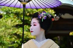 Maiko_20170528_22_11 (kyoto flower) Tags: eishoin temple tomitsuyu kyoto maiko 20170528 舞妓 栄摂院 富津兪 京都 tugumiyoshikawa