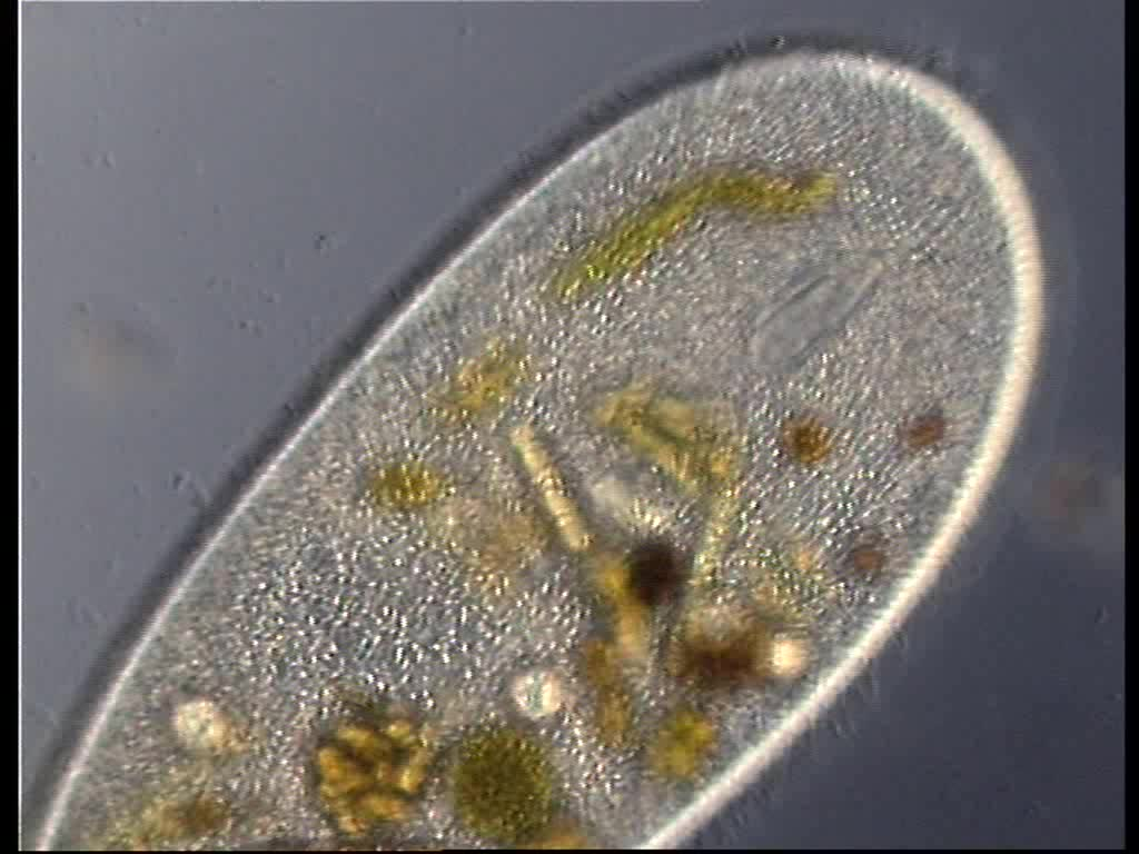 The world s newest photos of biologia and microscopio flickr
