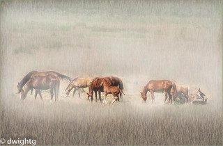 Wild Horses with colt….. HSS