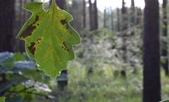 Bild #7 (J4yP) Tags: berlin landscape nature natur landschaft germany deutschland nikon macro makro makrofotografie photography