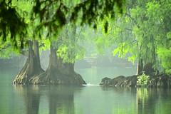 VERANO. (NIKONIANO) Tags: nature water méxico tree surreal árbol sabino agua lago mexicano