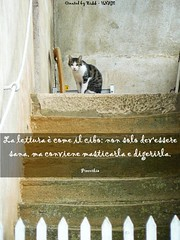 (in)CITAZIONI (Biblioteca Scienze Sociali UNIGE) Tags: proverbio gatto gatti catz kitten lettura libri letture genova università unige biblioteca biblioteche citazioni citazione