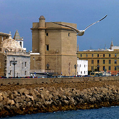 Cadiz, Andalusia, Spain (pom.angers) Tags: panasonicdmctz30 april 2017 españa andalucìa spain andalusia cadiz europeanunion bird gull seagull religion church sea 100