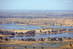 Okavango Delta (naturalturn) Tags: marsh wetland water river moremi moremigamereserve okavangodelta okavango delta botswana image:rating=5 image:id=204909