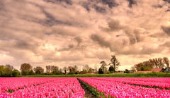 All lined up for spring. (Alex-de-Haas) Tags: oogvoornoordholland 1635mm d750 dutch europe hdr holland nederland nederlands nikkor nikon noordholland thenetherlands westfrisia westfriesland westfrieseomringdijk clouds landscape landschap lucht nature natuur skies sky wolken