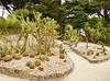 07.06.2017 - Batz, jardin Georges-Delaselle (45) (maryvalem) Tags: france bretagne finistère îledebatz alem lemétayer alainlemétayer