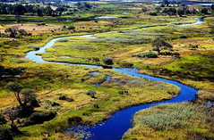 Okavango Delta, Moremi National Park, Botswana, Africa (klauslang99) Tags: klauslang nature naturalworld okavangodelta moremi national park botswana swamp africa