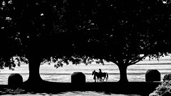 Midday Stroll (mikederrico69) Tags: silouhette walk bw blackandwhite monochrome trees nature lake river horse ride stroll park trip travel exploration hiking light beach water