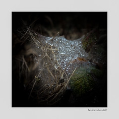 the web.... (bevscwelsh) Tags: cobweb raindrops leaf nature sonyrx100m3