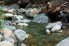 FlyFisher DSC_3704 (touhenboku) Tags: iwana char fly fishing flyfishing stream branch water rock