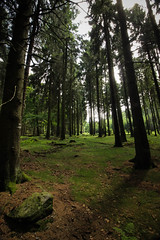 Wald (sabine5235) Tags: feldberg wald spaziergang wandern hiking baum stein grün natur outdoor