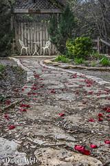 (117/80) Down the Garden Path (xTexAnne) Tags: ©diannewhite nikond7200 waco texas 117picturesin2017 garden path rosepetal bistro