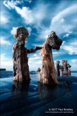 Sandsend IR (ScudMonkey) Tags: sandsend c2017paulbradley anthropomorphism groyne posts wood coast beach northyorkshire digitalinfrared converted canon 30d 720nm efs1022mmf35 falsecolour whitby