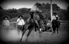 Leandro Bittencourt (Eduardo Amorim) Tags: gaúcho gaúchos gaucho gauchos cavalos caballos horses chevaux cavalli pferde caballo horse cheval cavallo pferd crioulo criollo crioulos criollos cavalocrioulo cavaloscrioulos caballocriollo caballoscriollos pampa campanha fronteira bagé riograndedosul brésil brasil sudamérica südamerika suramérica américadosul southamerica amériquedusud americameridionale américadelsur americadelsud cavalo 馬 حصان 马 лошадь ঘোড়া 말 סוס ม้า häst hest hevonen άλογο brazil eduardoamorim gineteada jineteada