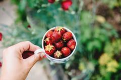 self-picked from the garden always tastes best (lina zelonka) Tags: erdbeeren strawberries garden linazelonka 35mm food healthy fruit früchte essen garten tasse cup red nature gesund nikond7100 bokeh