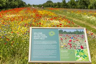 Royal British Legion Poppy Field (Explored 19-Jun-17)