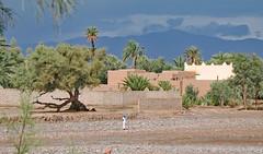 Solitary Figure (Ellsasha) Tags: aitbenhaddou skoura morocco northafrica storm kasbah