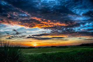 Sunrise at the Celery Fields