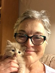 Me with Little Guy (Philosopher Queen) Tags: cat babycat kitty kitten gatito chat buff beige selfiewithkitten