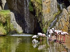 Once upon a time in Africa (gerard eder) Tags: landscape landschaft paisajes natur nature naturaleza world travel reise viajes europa europe españa spain spanien valencia bioparc zoo zoologico tiergarten tierpark flamingos wasser water waterfall wasserfall cascada outdoor