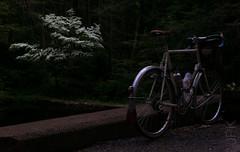 Bloom. (koperajoe) Tags: somafab soma frenchfenders bicycle randonneur 650b cyclotourisme velo