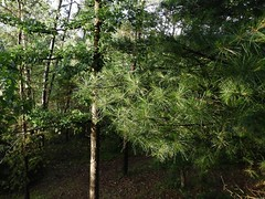 You, The Wild (Chicago Man) Tags: waushara county wausharacounty wisconsin usa nature north northwoods scene woods forest johnwiwanski
