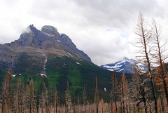 charred forest (ekelly80) Tags: montana glaciernationalpark nationalparkservice nps june2017 keisgoesusa roadtrip optoutside findyourpark mountains rockymountains goingtothesunroad view scenery forest charred fire burned burnt trees snow waterfall water beautiful