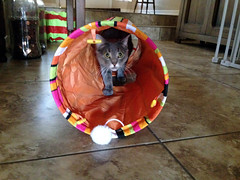 189 - Tube Kitty (jbpro) Tags: cat kitty tube sneaking 365 days photo challenge july