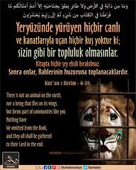 Kerim Kur'an 6-38 (Oku Rabbinin Adiyla) Tags: allah kuran islam ayet ayetler aytullah hadis hadisler dua dualar sure sureler islamic tevhid verse quran gow religion animal lion animals hayvanhakları