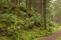 Track Sweet Track (Click And Pray) Tags: managedbyclickandpraysflickrmanagr pucksglen path trees woodland landscape foresttrack forest argyll scotland track horizontal downhill pucksglenpathtreeswoodlandlandscapeforesttrackforestargyllscotlandtrackhorizontaldownhillgbr