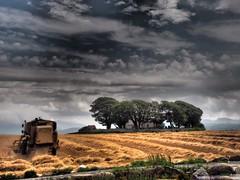 Harvest time (melgarside) Tags: harvest farming landscape countryside snowdon snowdonia cymru wales