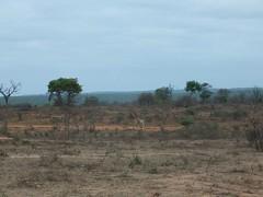 Steppe in Südafrika