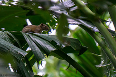 DSC01675 (explorewithez) Tags: nature birds butterflies flowers floraandfauna